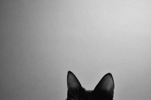 black-and-white-cat-color-cool-Favim.com-894076